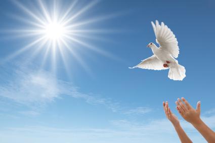 hands releasing dove